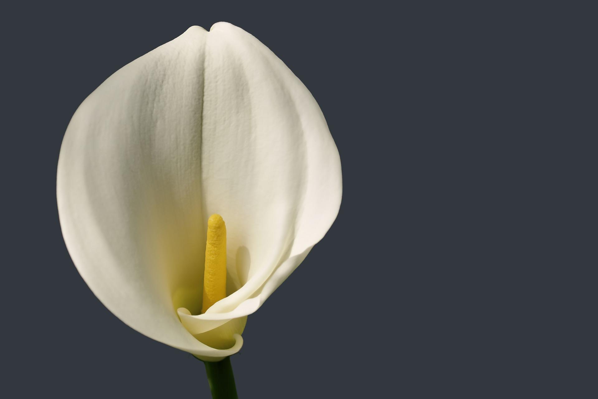 flower-1977344_1920